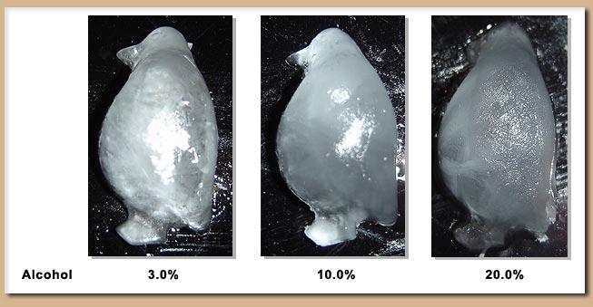 Scientific Ameriken Alcohol And Freezing Determining