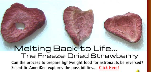 Scientific AmeriKen attempts to bring a strawberry back to life from its mummified state! Click here to find out how!