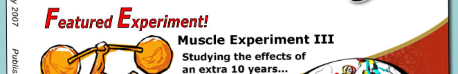 !0 Years later Scientific AmeriKen is still trying to understand muscle growth. In this experiment, the rate of muscle increase is investigated in a comparison between a 20 year old SciameriKen against a 30 year old...
